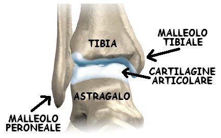 caviglia-ossa